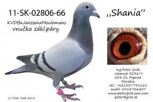 11-SK-02806-66